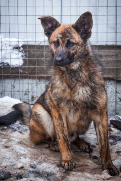 Красивый пес ищет дом