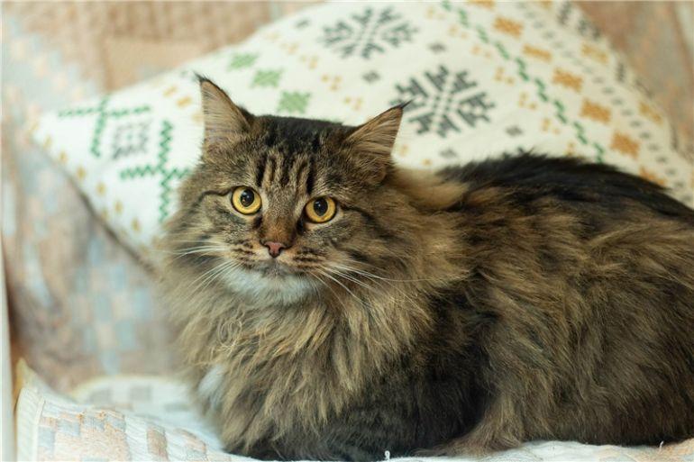 Шикарный котик Пуш ищет дом