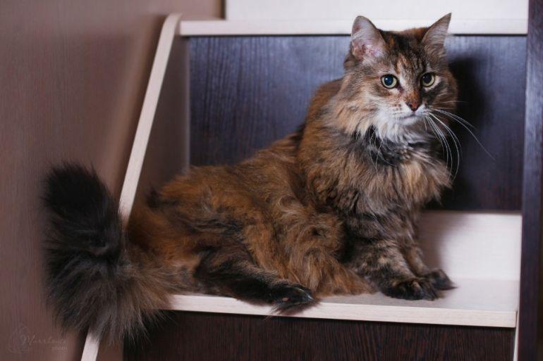 Кошечка Маняша, настоящее сокровище и компаньон