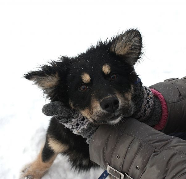 Милый щенок Ларс ищет дом