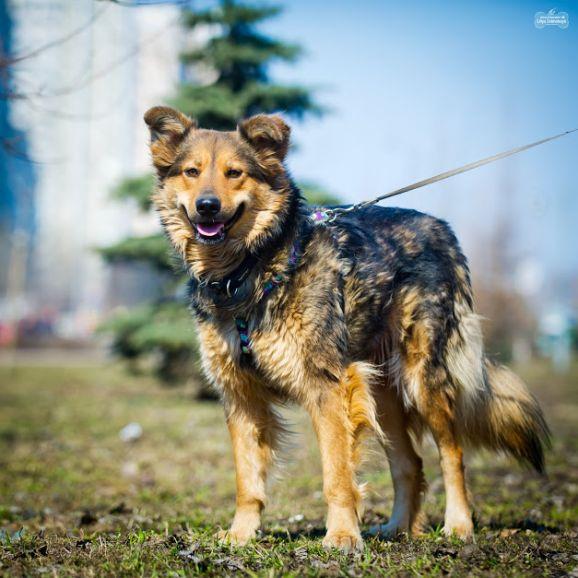 Шикарная собака Белла в добрые руки