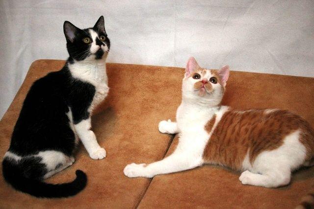 Котята Персик и Кляксик в добрые руки