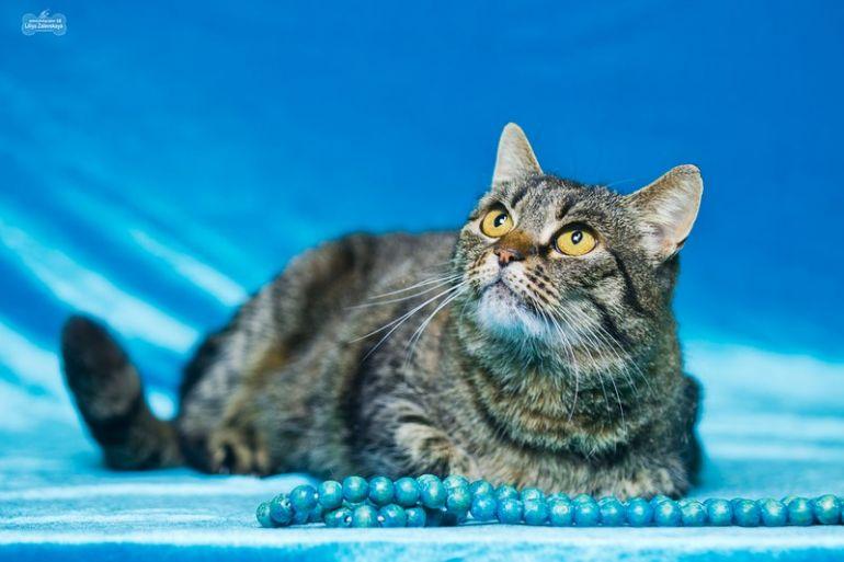 Замуррчательная кошка с Лунными глазами - счастье в дом