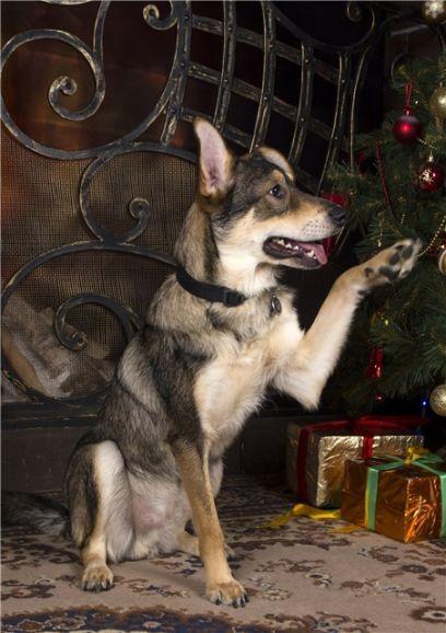 Пёс Джефри в поисках Мам-и-Пап