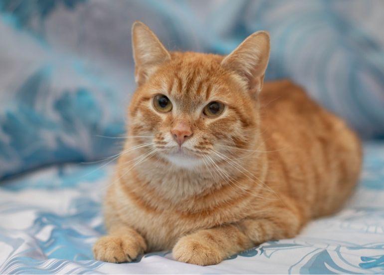 Солнечный котик Леон ищет новый дом