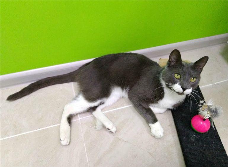 Чудесный котик Феликс ищет дом