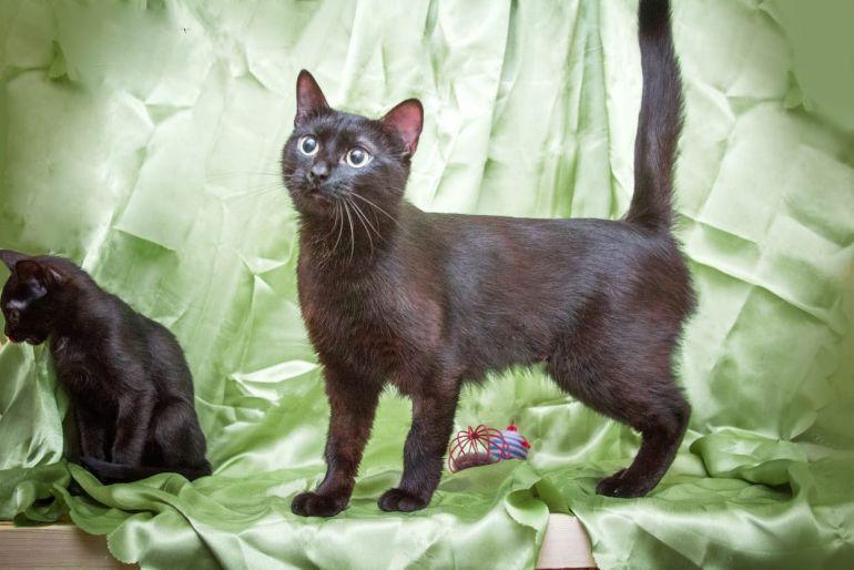 Ищет дом Тесс - кошка с прекрасным характером