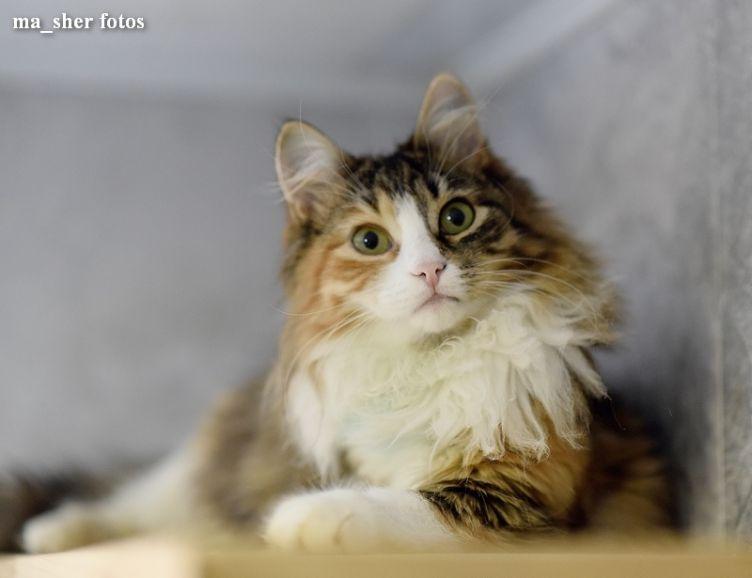 Котенок Шерпа
