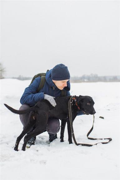 Молодая собачка Афина ищет дом