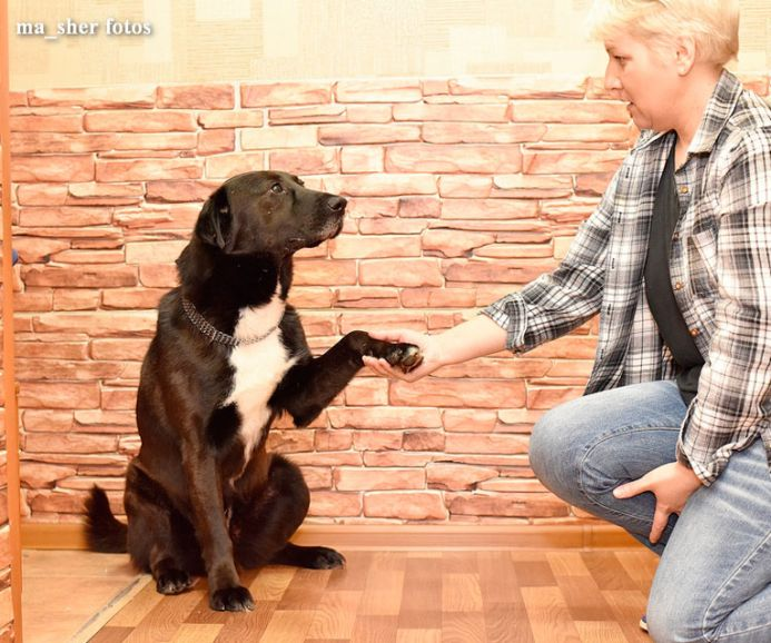 Очень ласковый и воспитанный пёс Мишутка в добрые руки
