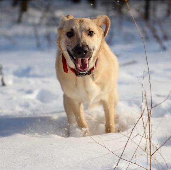 Собака-послушака в добрые руки