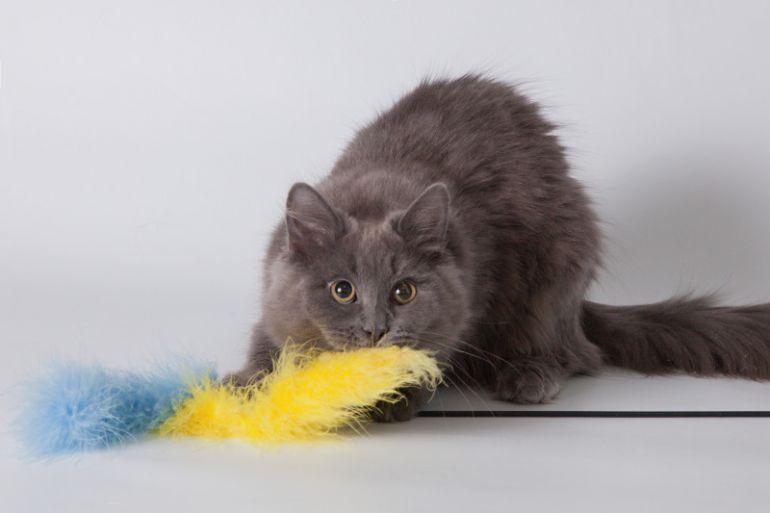 Ласковый пушистый котенок Бильбо, голубого окраса