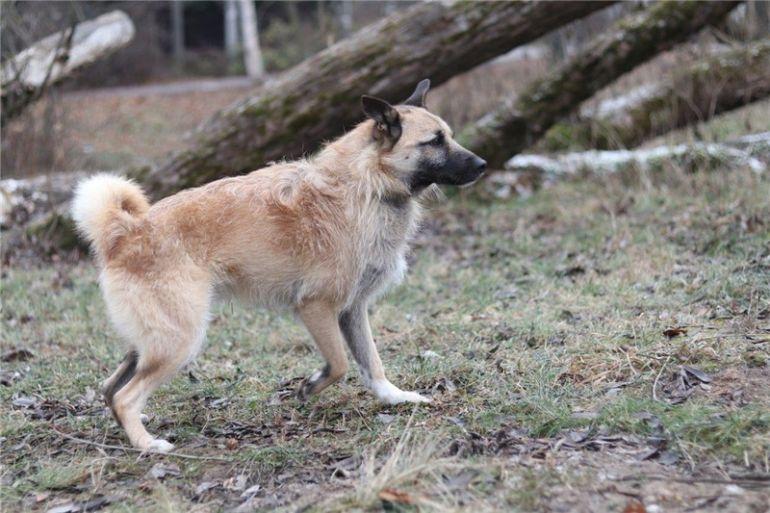 Чудесный пёс Родик ищет дом