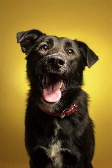 Молодая собака Даша ищет дом