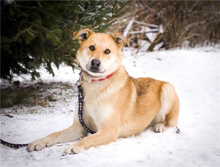 Чудесная собака Сенди в добрые руки