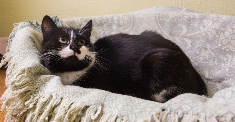 Котик Родион в поисках дома, в добрые руки
