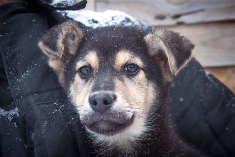 Очаровательный щенок в добрые руки