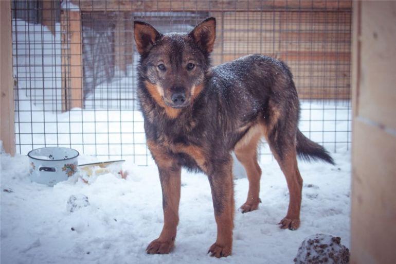 Собака Таша ищет дом