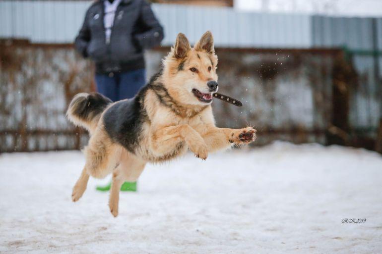 Замечательный пёс Рей ищет себе семью
