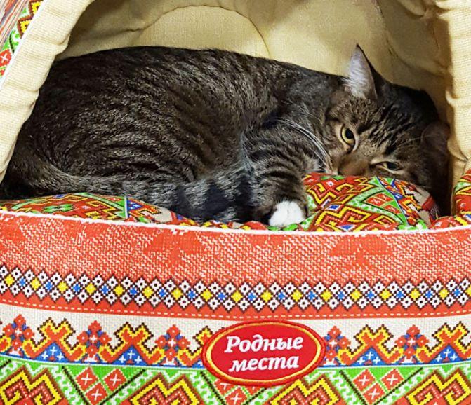 Трогательный спокойный котик Вальс ждёт хозяев в приютской клетке