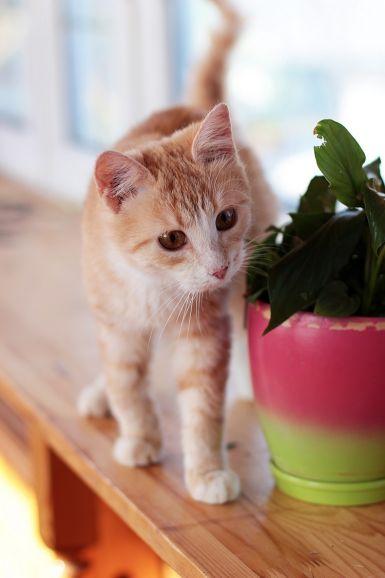 Котёнок Джинджер ищет дом