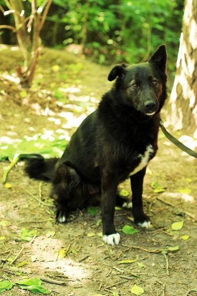 Пёс Айк ищет дом