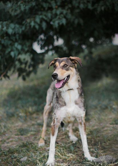 Собака Сири ищет дом