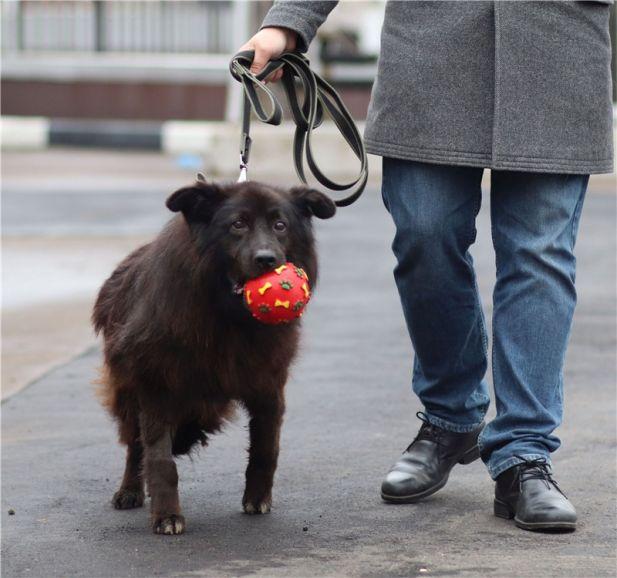 Замечательный пёс Мишка ищет дом