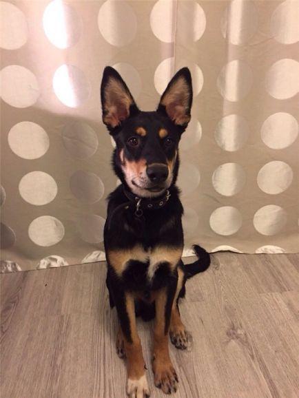 Замечательный щенок Барон ищет дом