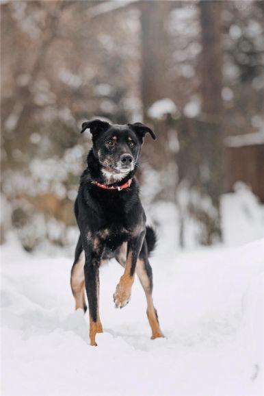 Чудесный пёс Гриша в добрые руки