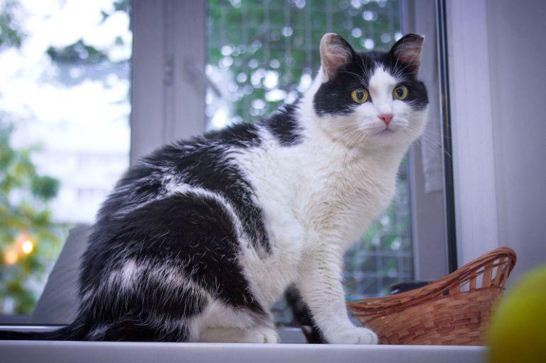 Чудо-кошка Агата Петровна