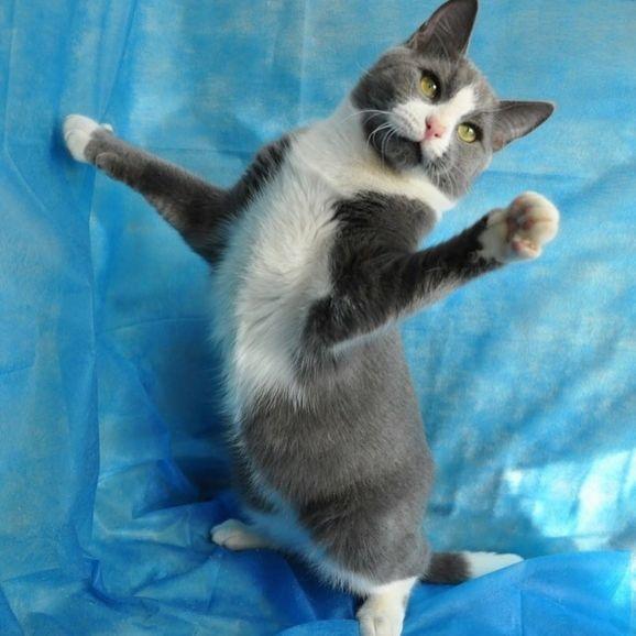 Кот Томас в поисках дома