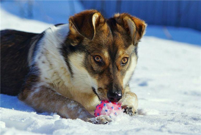 Чудесный щенок Жужа ищет дом