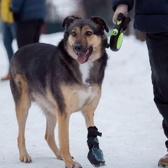 Мудрая, добрая и обаятельная собака Герда в добрые руки