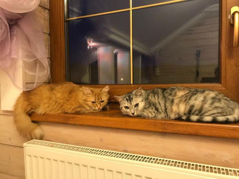 Две красивые молодые кошки в добрые руки