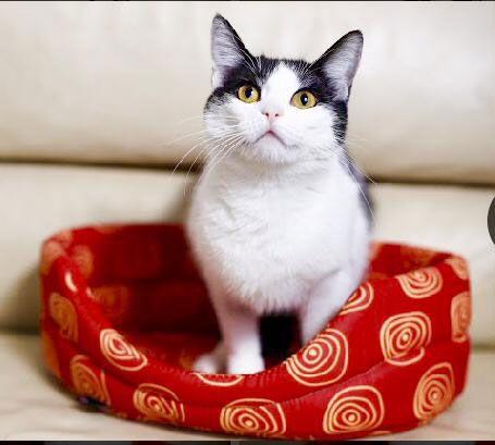 Кошечка Бусинка с идеальным характером в дар