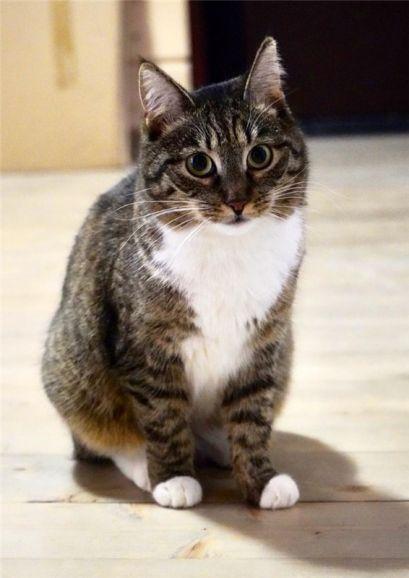 Кошечка Рыся ищет дом и любящее сердце.