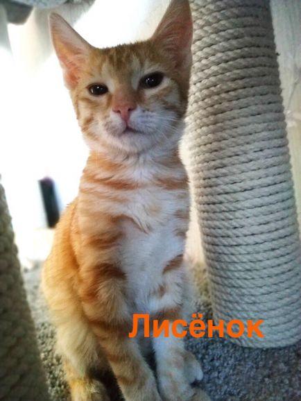 Котёнок Кот Кошка