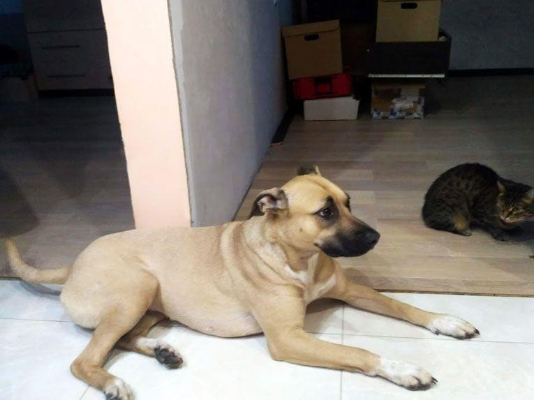 Красивая, сильная и дружелюбная собака Дина ищет дом