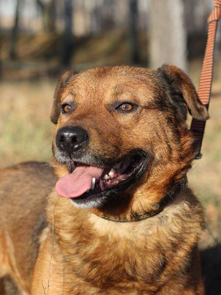 Домашний пёс Бруно страдает в приюте