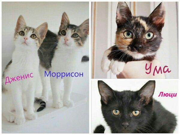 Котята-малыши мальчик и девочки в добрые руки