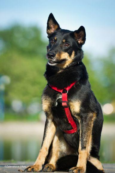 Ищет дом Лаймочка-небольшая собачка на трех лапках