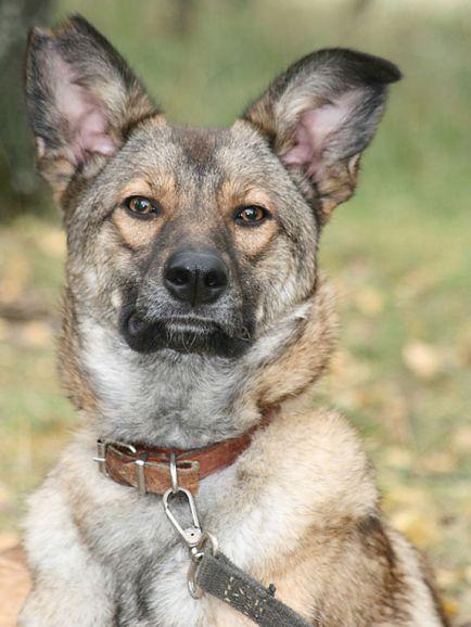 Молодая приютская собака Леся ищет дом
