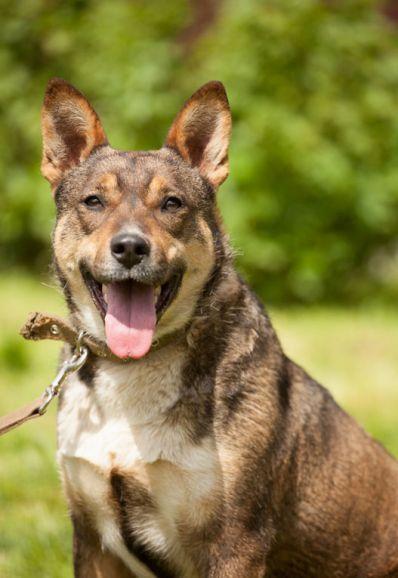 Прекрасная ухоженная собака Рума ищет дом
