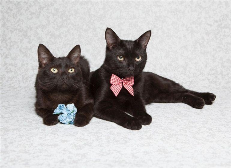 Подарите дом двум чёрным ласковым пантеркам