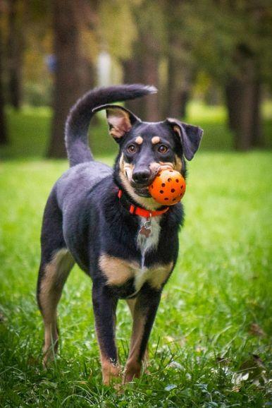Добрая собака Жуня в добрые руки.