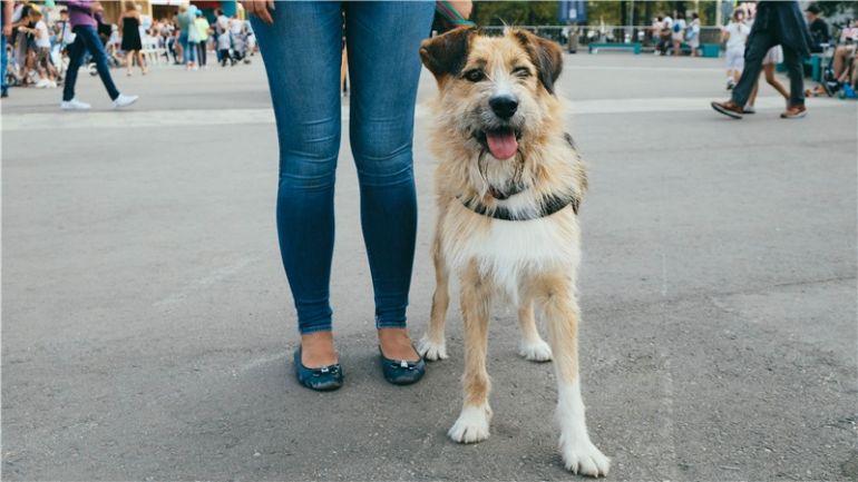 Очаровательная собачка Манка в добрые руки.