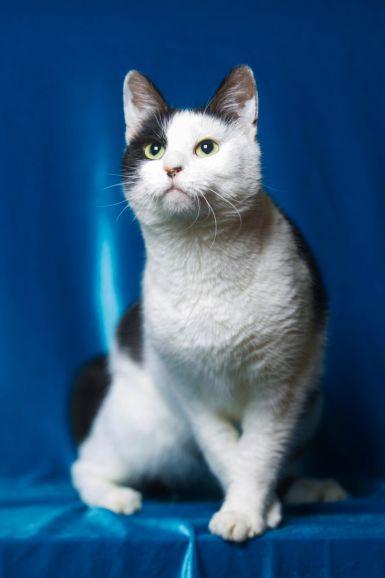 Дуся - молодая активная кошка ищет хозяев