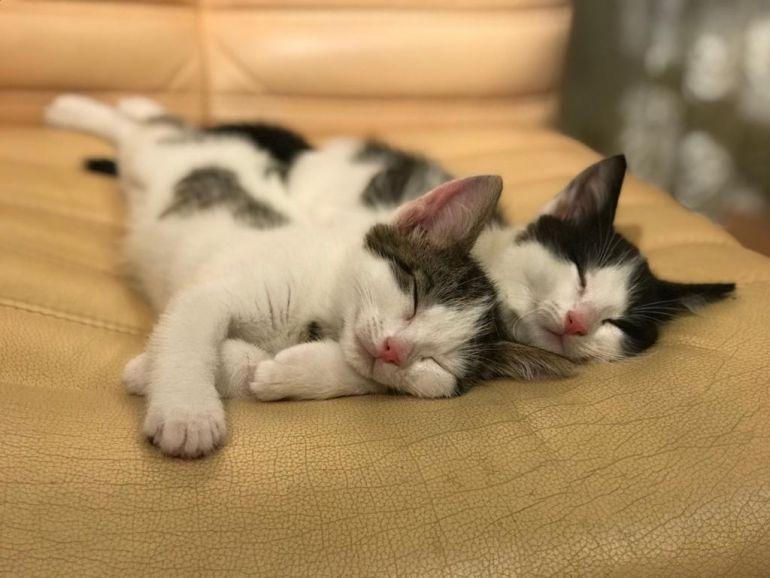 Три веселых, красивых и позитивных котенка в добрые руки