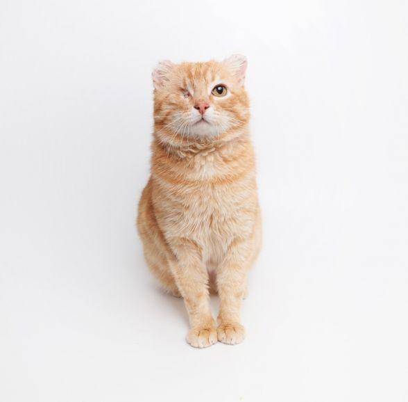 Котик Лео ищет дом.
